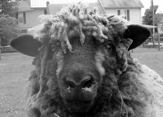 """Amy Undercoffler """"as wooly as they come"""