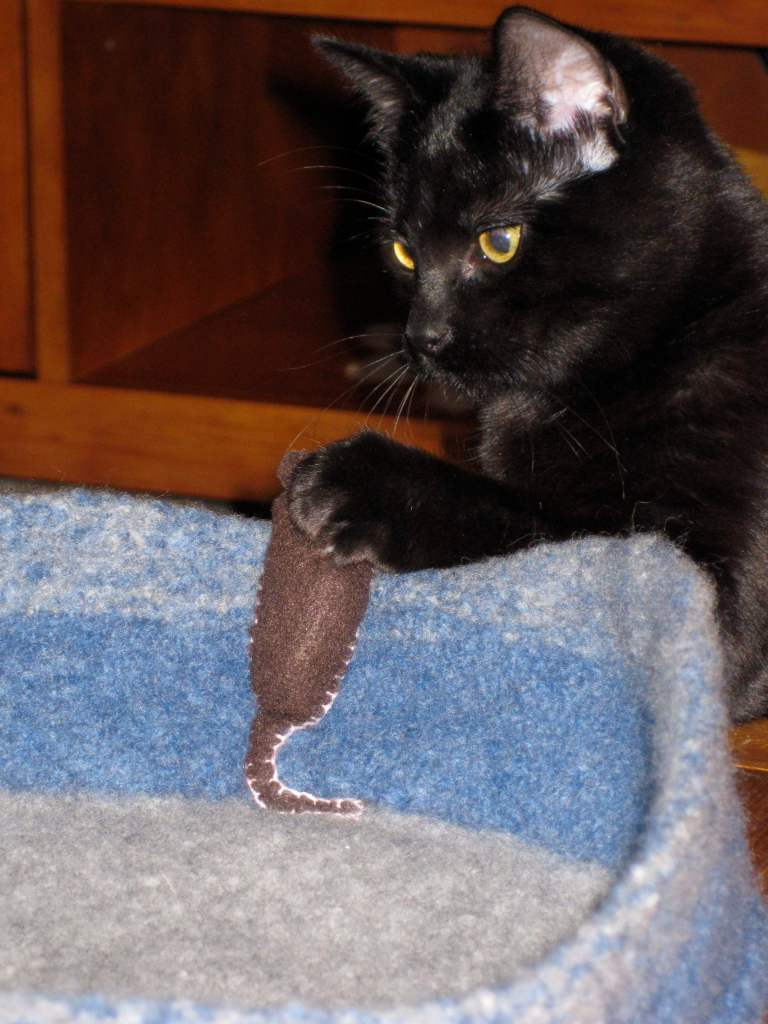 """Lucy 'catches' a mouse."" Jacqui says: ""the mouse and the bed are felted. The cat, however, is not."" - Jacqui Whitemore"