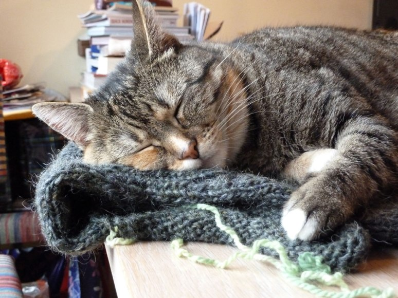 "'This is how my cat Ukkie prevents me from working with wool; she looks so happy sleeping on my WIP, I can't take it away from her, so have to work on something else instead"" – Anja Vos."