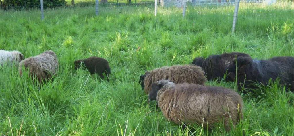 Diane.Falck-new-pasture-13m