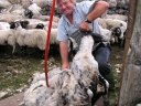 laura's-loom-shearing