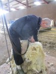 shearing-008_lesley-prior