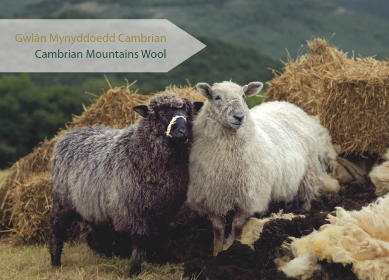 Cambrian-Wool-GroupSJames