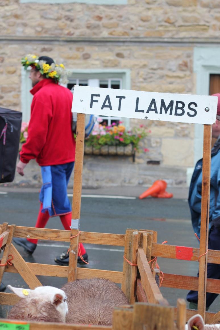 fat-lambs_Born&Bred