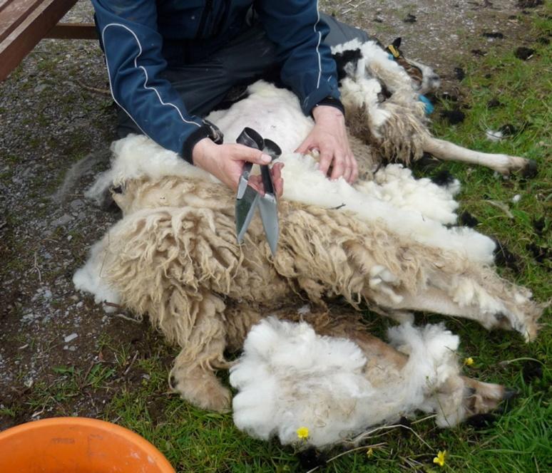 K_shearing