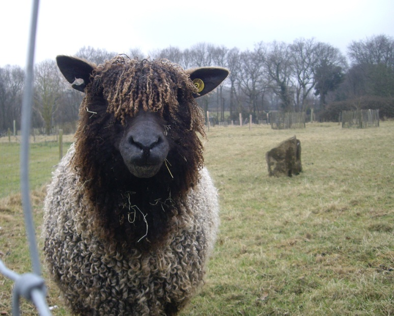 Is someone pulling the wool over your eyes?