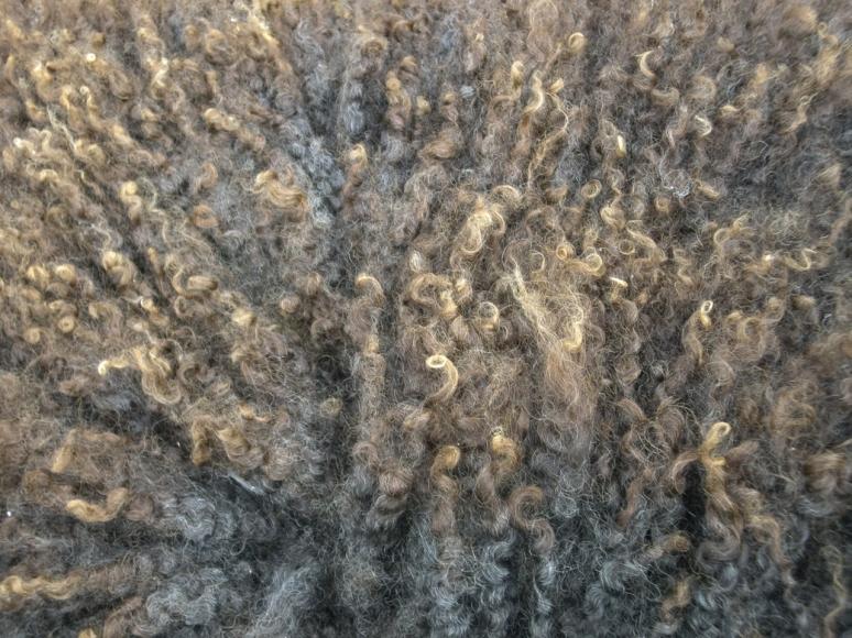 Burnished Tips of Fleece Julia Desch
