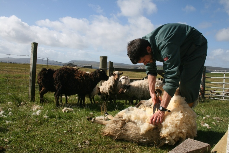 Chris clipping on the croft