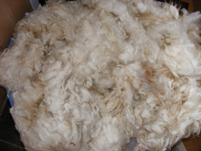 Freyalyn_washing_wool (16)