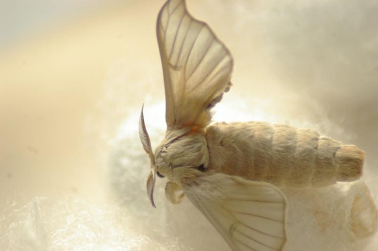 moth_buddy-1-2