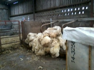potential hand-spinning fleeces