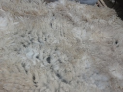 close up fleece