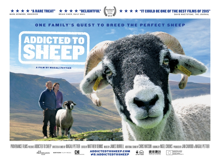 Addicted to Sheep (1 of 1)