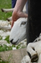 shear(4)