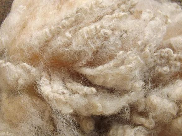 Fiona Curtis's Romney fleece