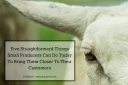 Sheep Small Prod
